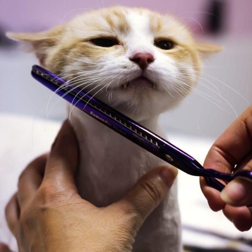 Кошка для стрижки